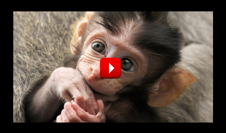 Most Cute Animals That Can Kill You