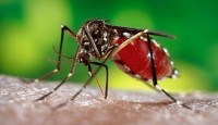 Deadly mosquitoes carrying Dengue fever and C