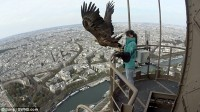 Eagle takes an amazing footage of Paris city