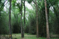 Bamboo Forests in Wayanad