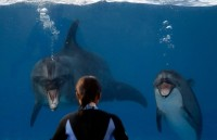 Dolphin-hunting Japanese town to start Dolphi