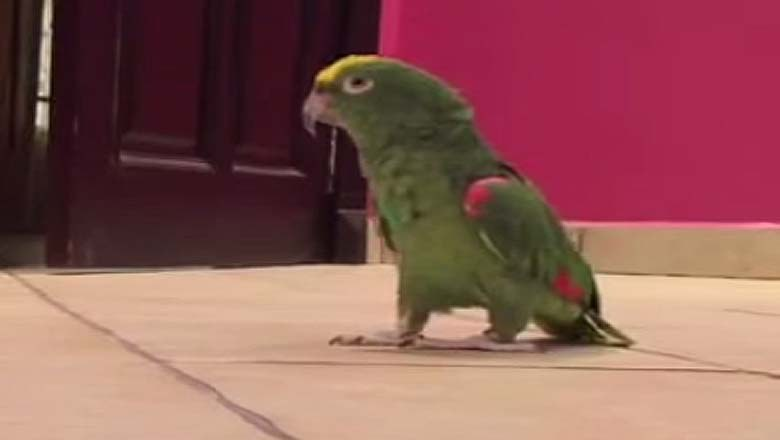 from prostitutes to parrots video