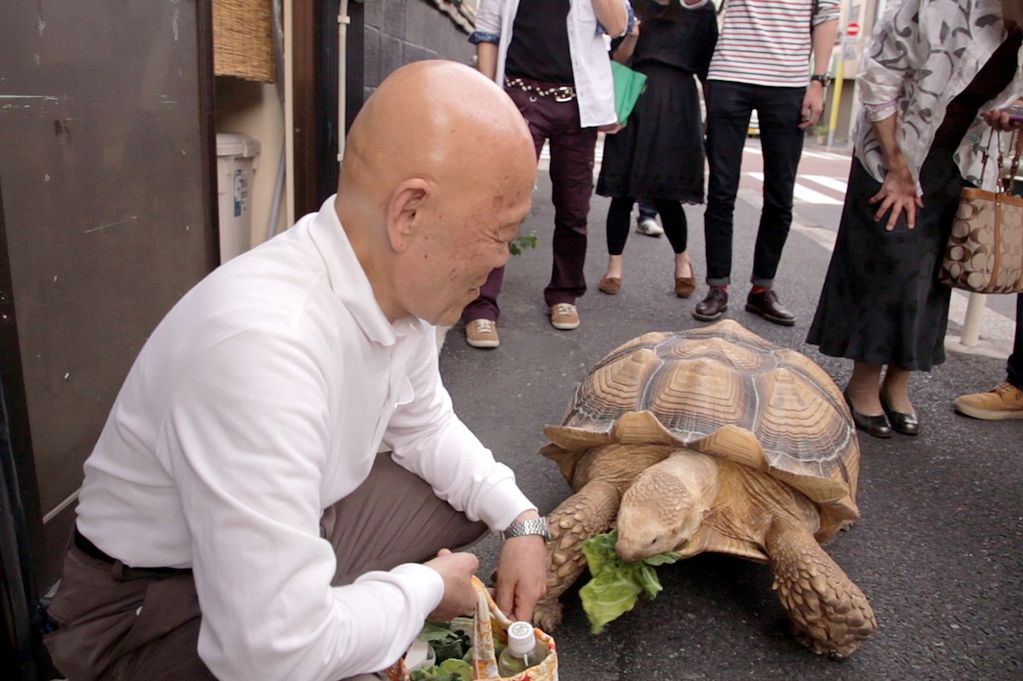 A Tokyo Man And His Pet Giant Tortoise Become Internet Sensation - Man walks pet tortoise through tokyo