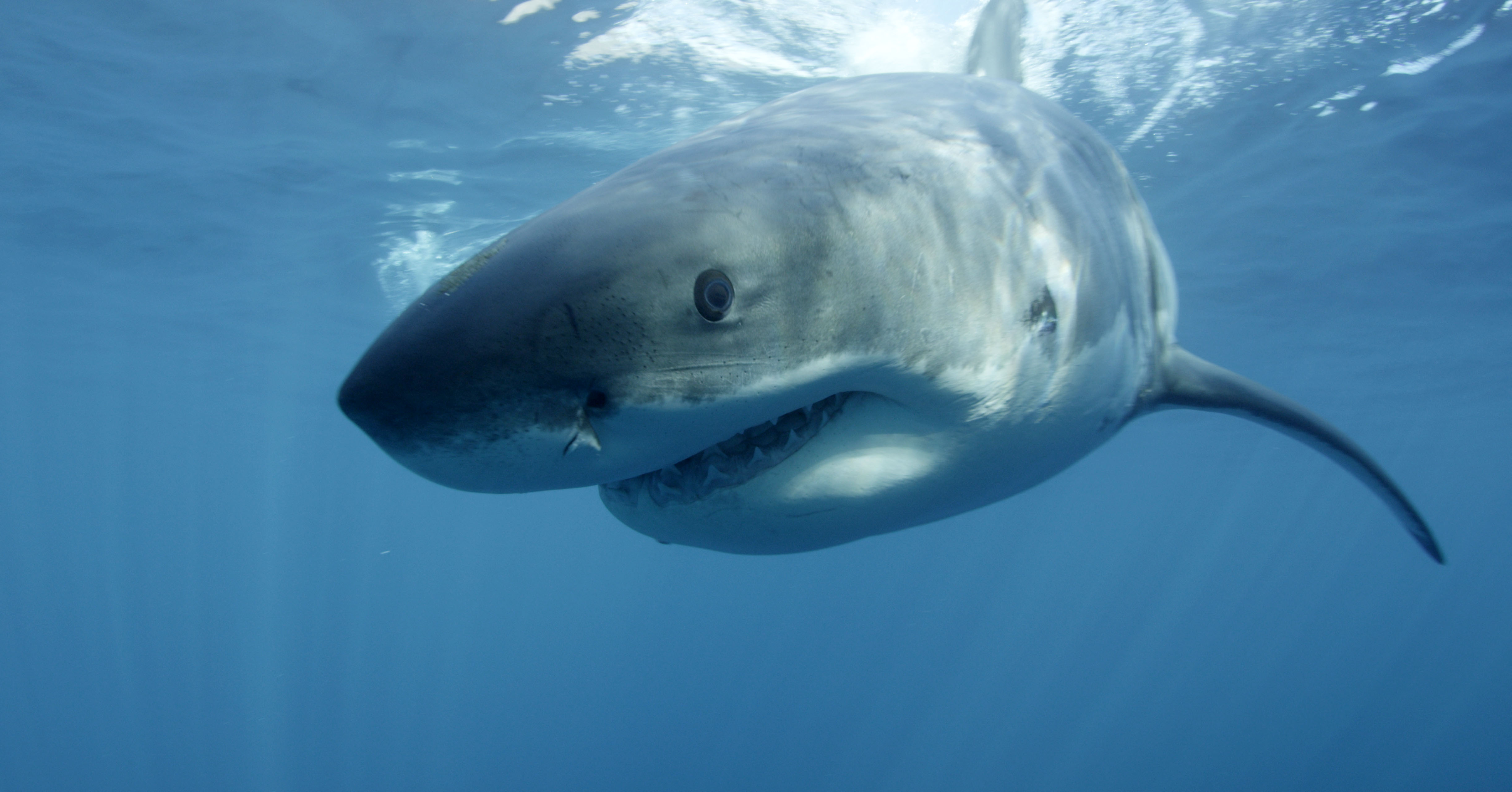 Swimmer Killed By Shark While Diving Off Australian Coast